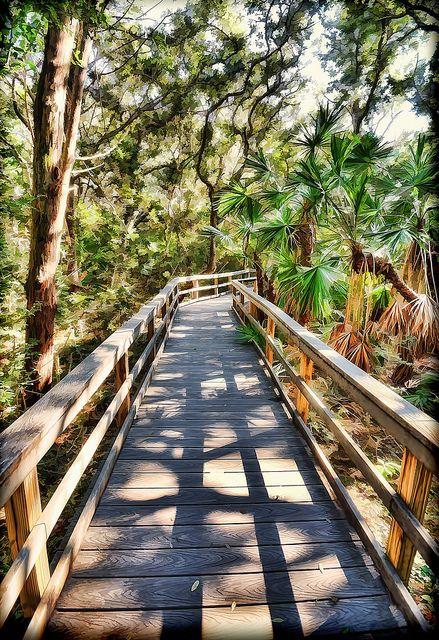 Matanzas State Park Palmettos and Oaks, St. Augustine, Florida by James Watkins