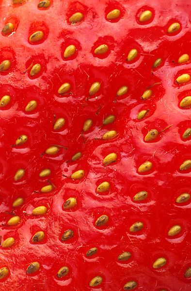 File:Closeup of a strawberry.jpg