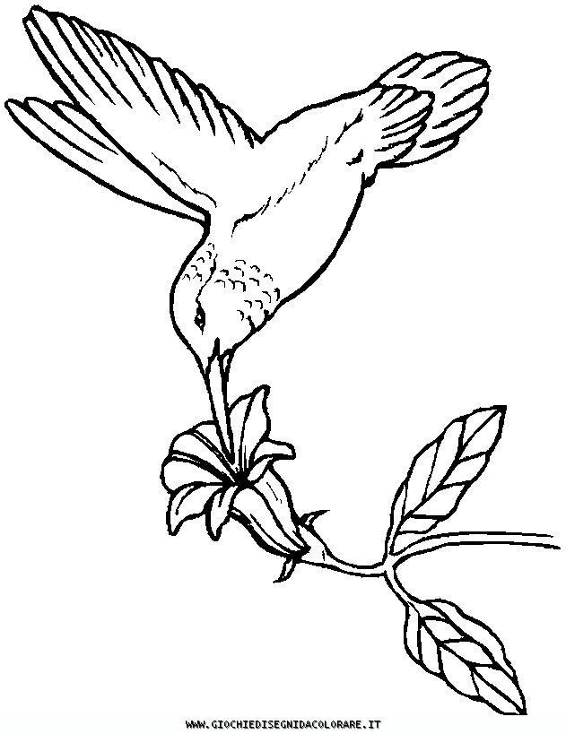 Free Printable Wood Burning Patterns | uccelli_30 Disegni da colorare di animali