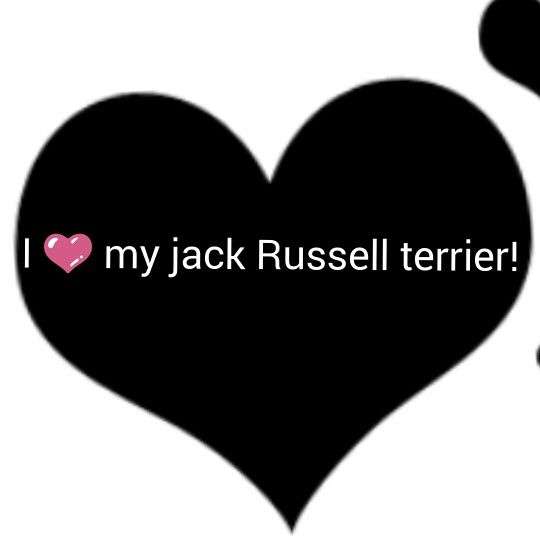 I'm getting a jack rusell terrier!!!!