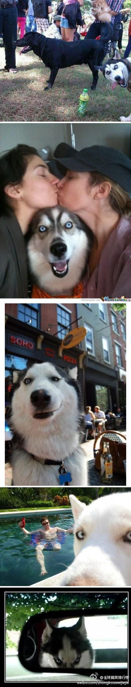 Huskeys make the best faces