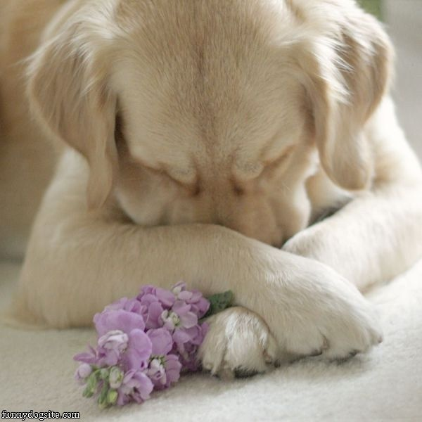 puppy prayer...or this flower is really bugging my allergies.