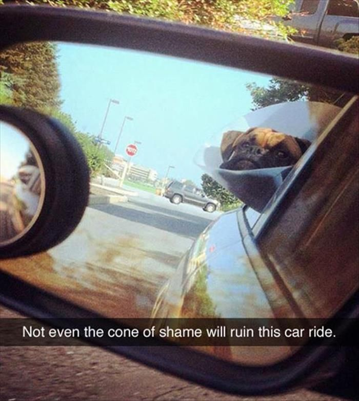 Funny Pictures Of The Day  49 Pics
