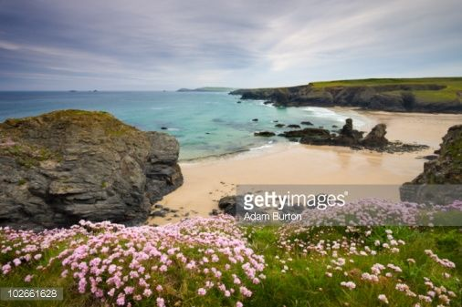 sea thrift in cornwall - Google Search