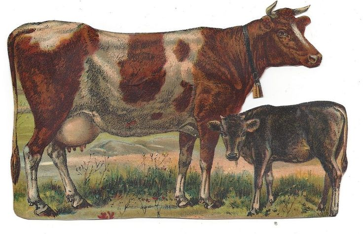 Victorian Die Cut Scrap of Cow and her Calf