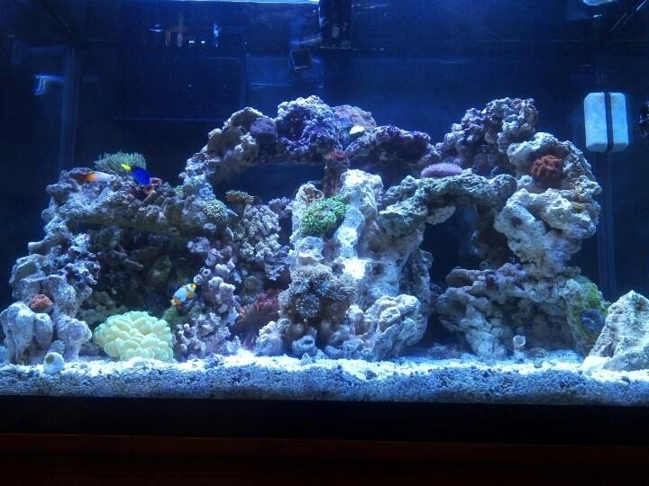 New Rockscape Reef Tank Gallon Reef