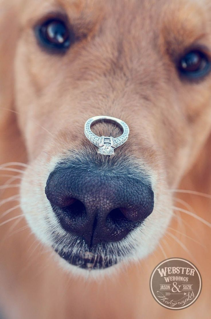 DOG + RING. Sweet wedding ring photo of your best furry friend! Wedding photos; wedding photography; wedding photo ideas; wedding with dogs. #WeddingPhotos #WeddingPhotography