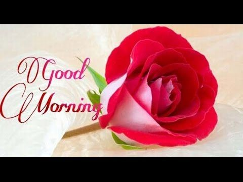 Good Morning Wishes,Greetings,Sms,Sayings,Quotes,E-card,Good Morning Whatsapp video - YouTube