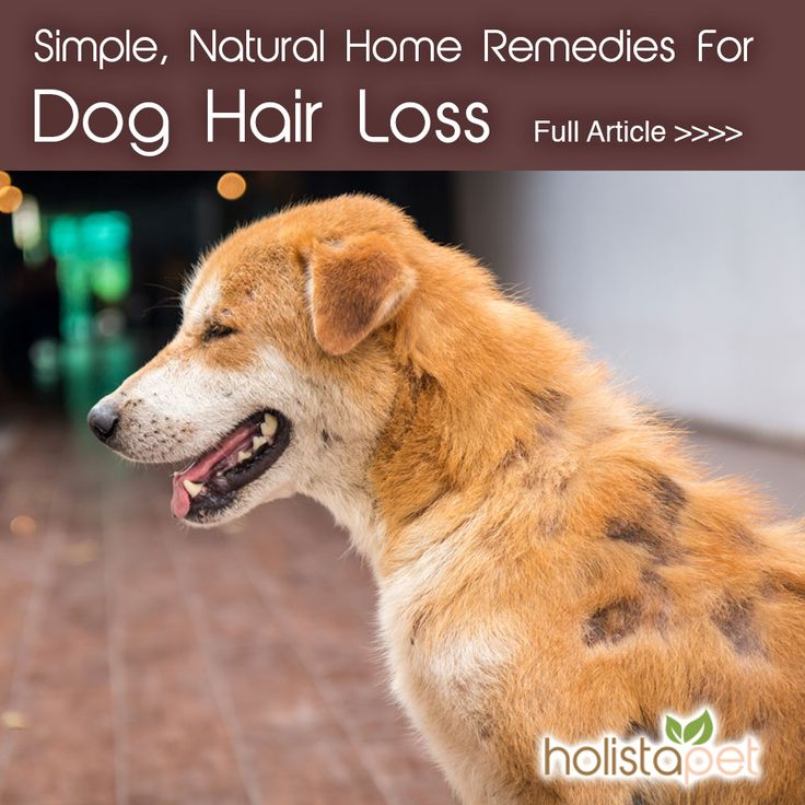 Natural Hair Loss Remedies For Dogs