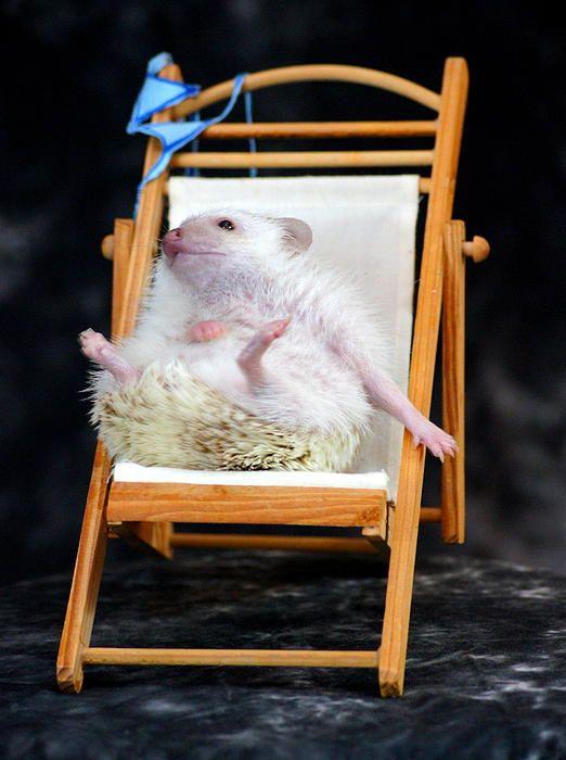 Lyla the hedgehog sunbathing