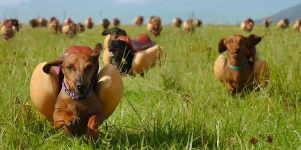 Running of the dachshunds {Heinz ketchup/mustard Super Bowl commercial}