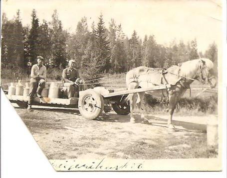 Finnish horse
