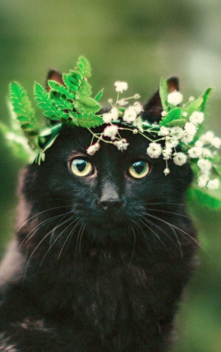 lovely headgear