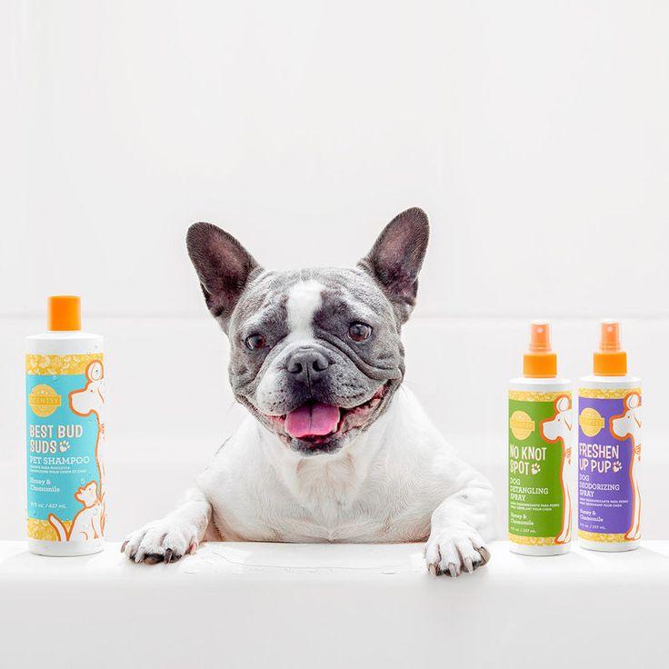Fragrancefocused pet shampoos scentsy scentsy