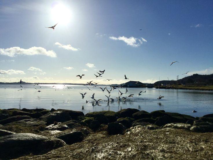 "(⁎ ✪͡ ◡͐✪͡ ⁎)ノ""Hafrsfjord/Stavanger Norway"