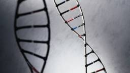 Court: Human genes cannot be patented