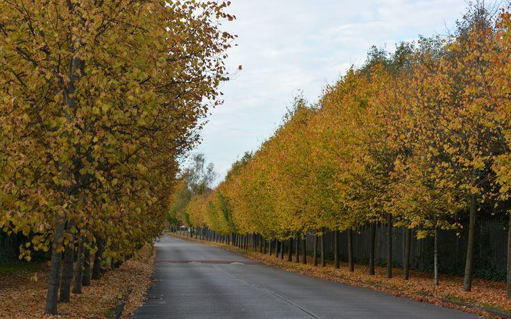 Loving Autumn in Kildare Ireland