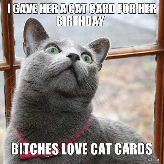 Cat Birthday Memes - Funny Happy Birthday Cat Images For 2016