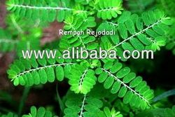 Specifications  Meniran (Phyllanthus Niruri)  Action :  1. It blocks DNA polymerase, an enzyme required by Hepatitis B virus for growth and replication.  2. It inhibits lipid peroxidation, and scavenges hydroxyl and superoxide in vitro.  3. It show inhibiting properties on both COX-2 and inducible nitric oxide synthase (iNOS).  4. It plays important role in disruption of HbsAg mRNA transcription and post-transcription which is beneficial against viral carcinogenesis.