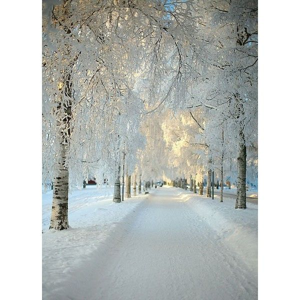 Design Chic ❤ liked on Polyvore featuring backgrounds, photos, tree, white and winter