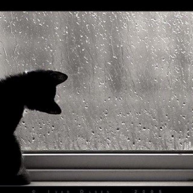 Chove chuva, chove sem parar ..