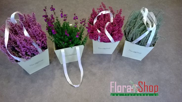 Erica Vulgaris, vres, hardy plant, beautiful colors for winter