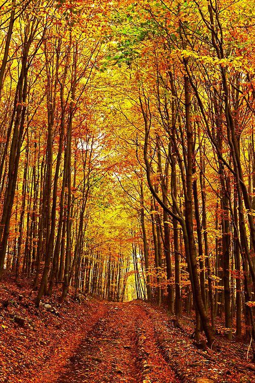 Bükk Mountains, Hungary (by jolizoli)