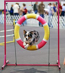 Dog agility ... a great sport to bond with your dog. Even better to keep his mind & body in shape. Fun. Real fun.