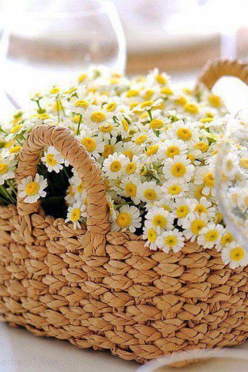 Daisies #Spring #flowers