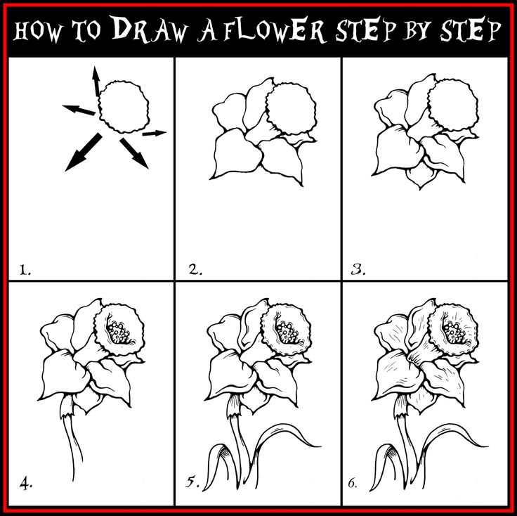 Draw Roses Step by Step | Daryl Hobson Artwork: How To Draw A Flower Step By Step Drawing Guide