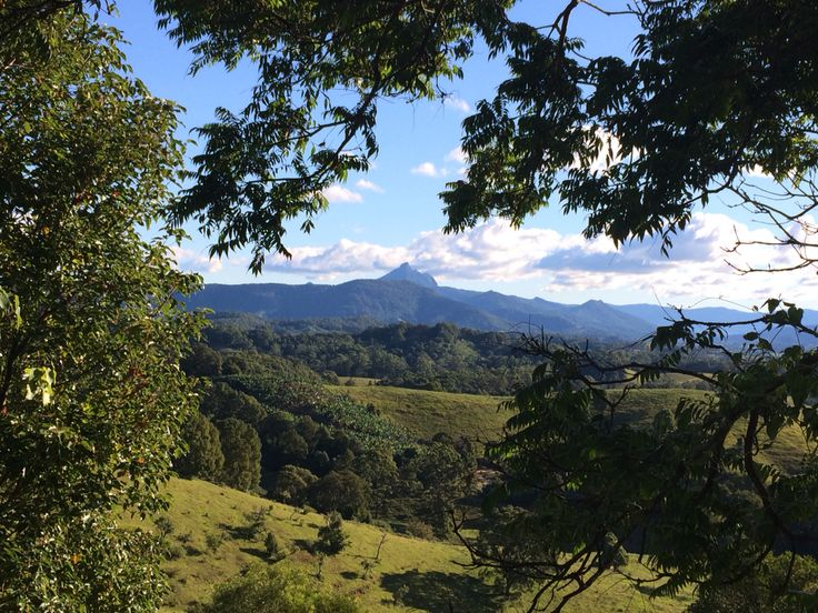 Glorious View of Mount Warning from Kielvale #mountwarning #northernnsw