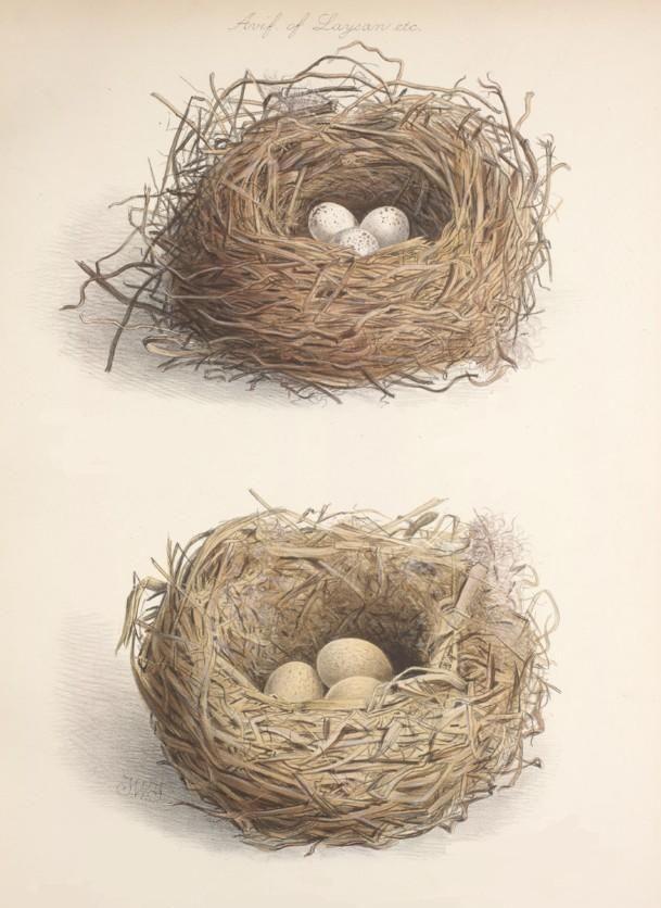 Pâques...Nests