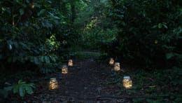 Cosmic Jar:  Garden  by HeadSprung Ltd