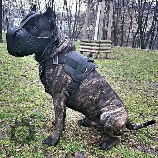 Bestseller Large Dog Harness For Presa Canario Dog Muzzle Bull