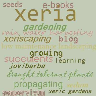 23 best gardening succulent xeriscaping e books images on xeria e zine keep up to date with all the latest trends in growing succulents fandeluxe Choice Image