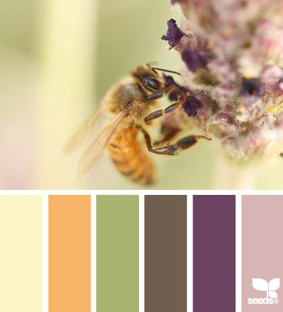 10 Images About Beautiful Color Palettes On Pinterest