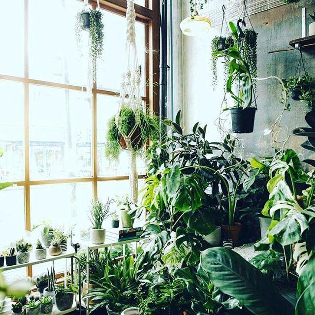 Indoor urban jungle More