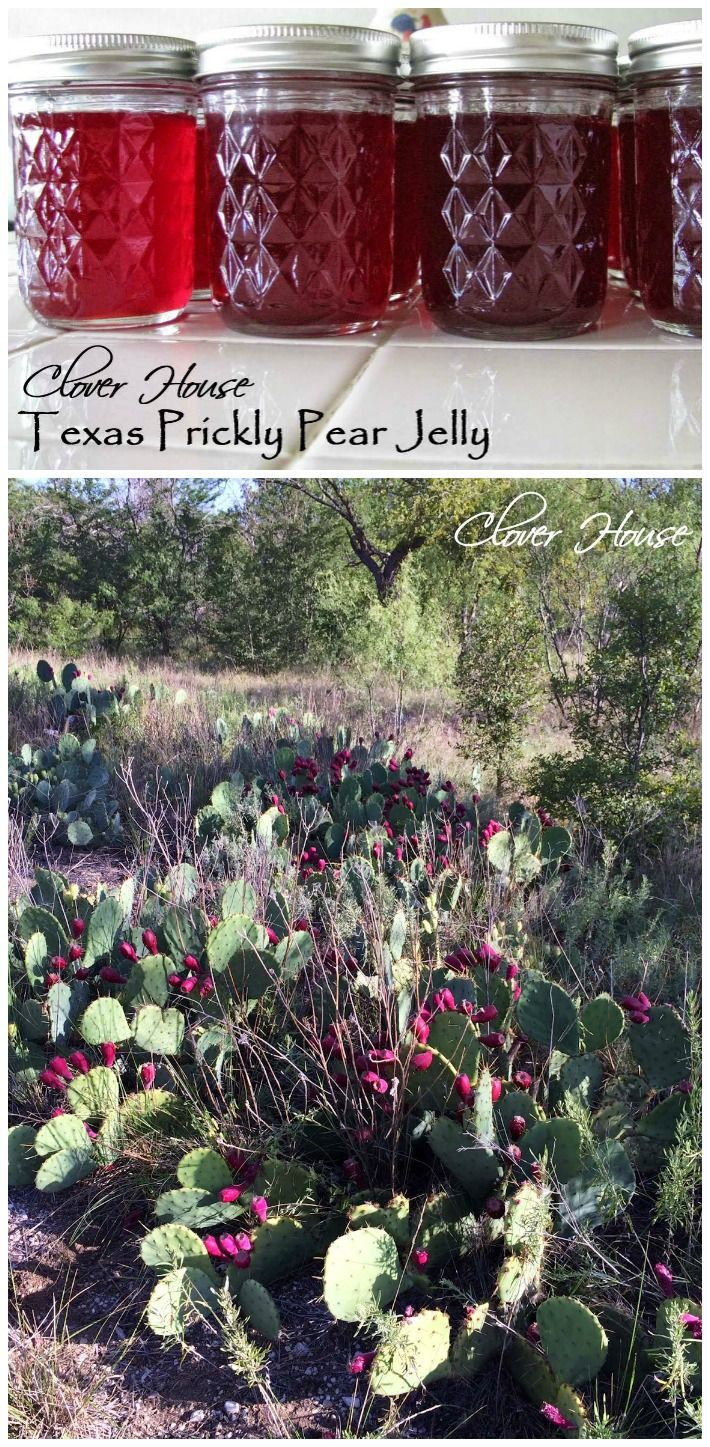 Texas Prickly Pear Cactus Jelly by Clover House