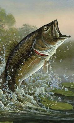 Lake Trout Fish Cakes