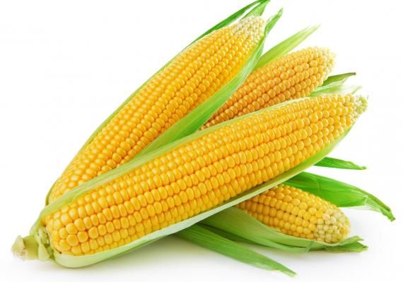 Corn use for ethanol offsets lower USDA export forecast http://goo.gl/TTwMMw #cornexport #corn #exportimportnews #tradenews