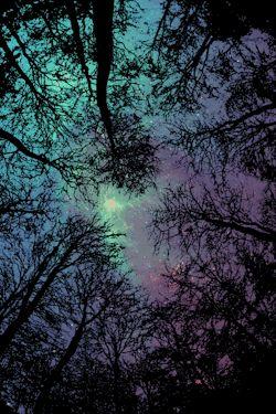 gif stars night sky forest