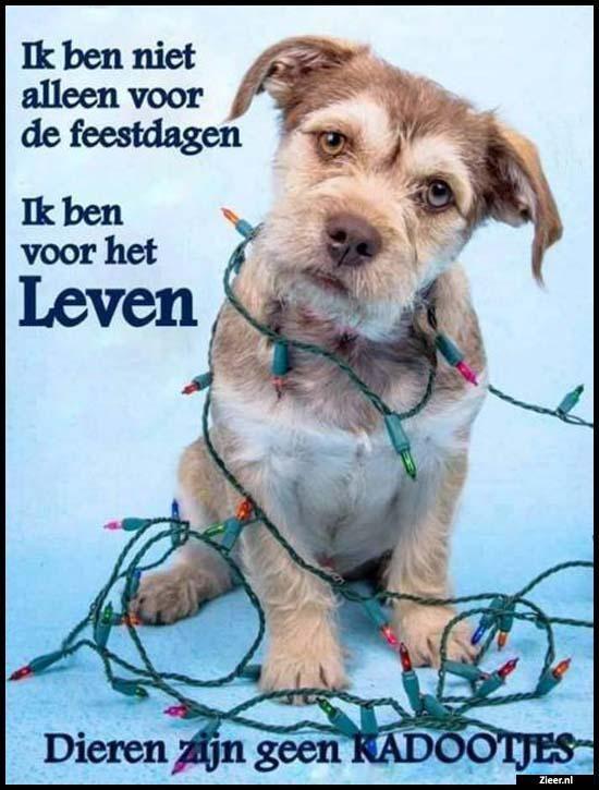 Citaten Over Dieren : Beste ideeën over honden teksten op pinterest