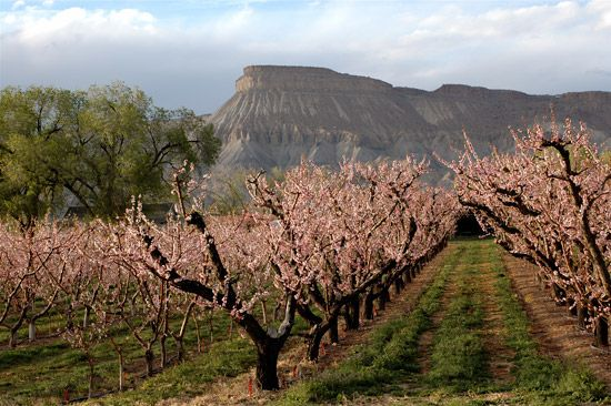 48 Best Springtime In The Grand Valley Images On Pinterest Fruit Tree Garden Orchards And