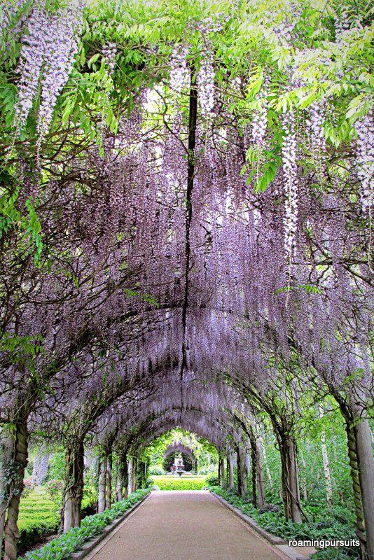 #Alowyn #Gardens, #Yarra #Valley, #Melbourne #wisteria