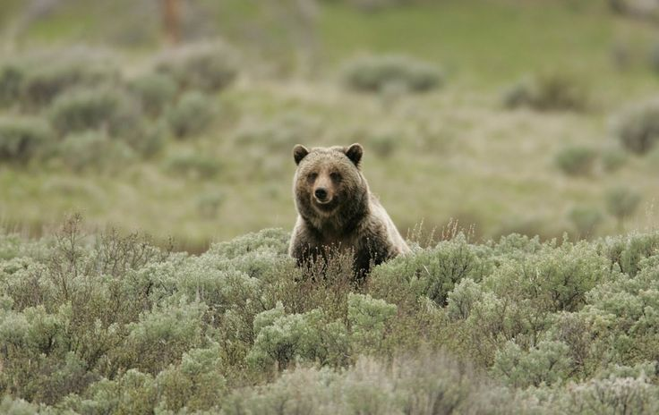 adorable bear (but this links to an article about stupid people)