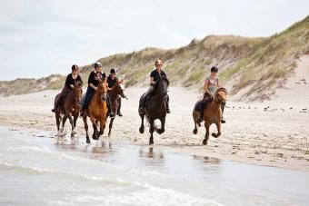 Paardrijden op Vlieland. Manege de Seeruyter ligt in de duinen aan het Noordzeestrand. Ze organiseren buitenritten in het bos of op het strand en tochtjes met een wandelpony.