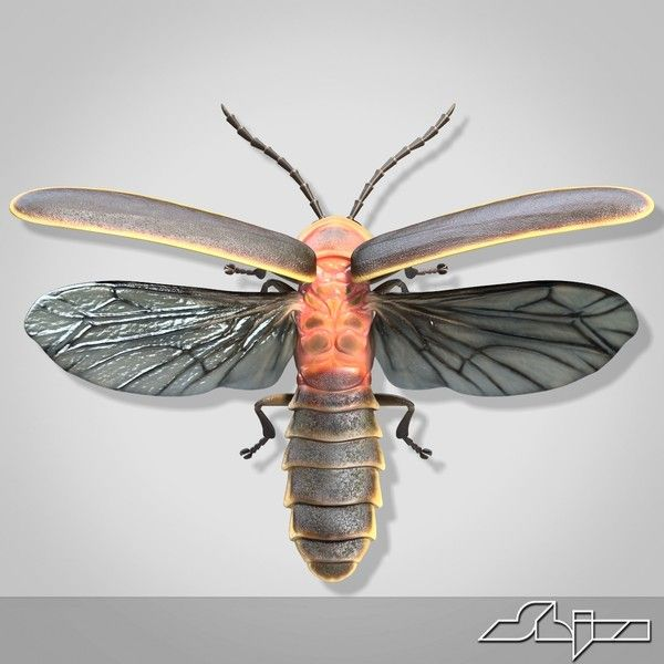 firefly anatomy - Google Search | Insectes, Luciole, Tatouage