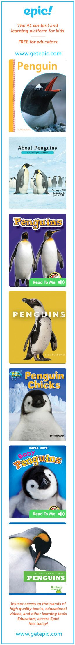 Penguins - All about penguins