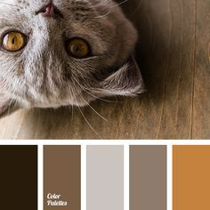 beige, brown with a shade of gray, color matching, dark brown, dark gray-brown color, gray-brown, light brown, monochrome brown palette, monochrome color palette, reddish-brown color, shades of brown.