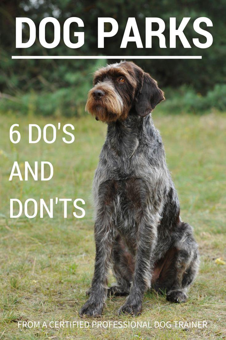 Simple Dog Park Rules Every Pet Parent Should Follow